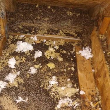 Attic Kings Attic Restoration Atlanta Animal Damage