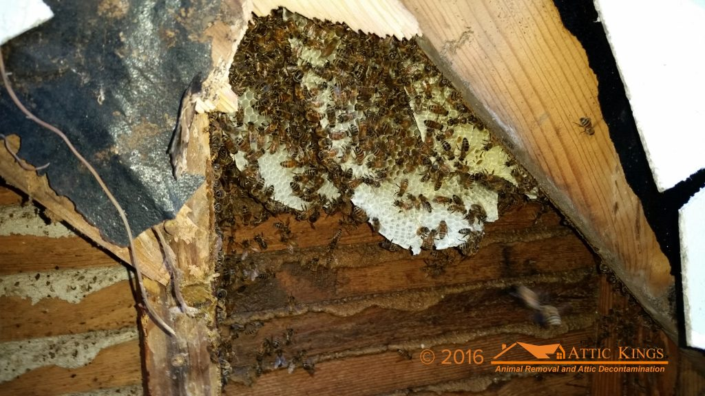 Bee Removal In Lawrenceville Ga Amp Port St Lucie Fl
