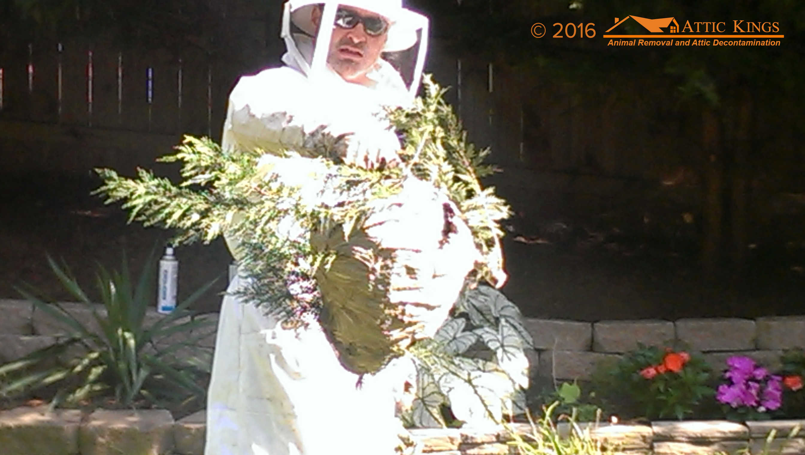 Bee Amp Beehive Removal In Lawrenceville And Grayson Ga