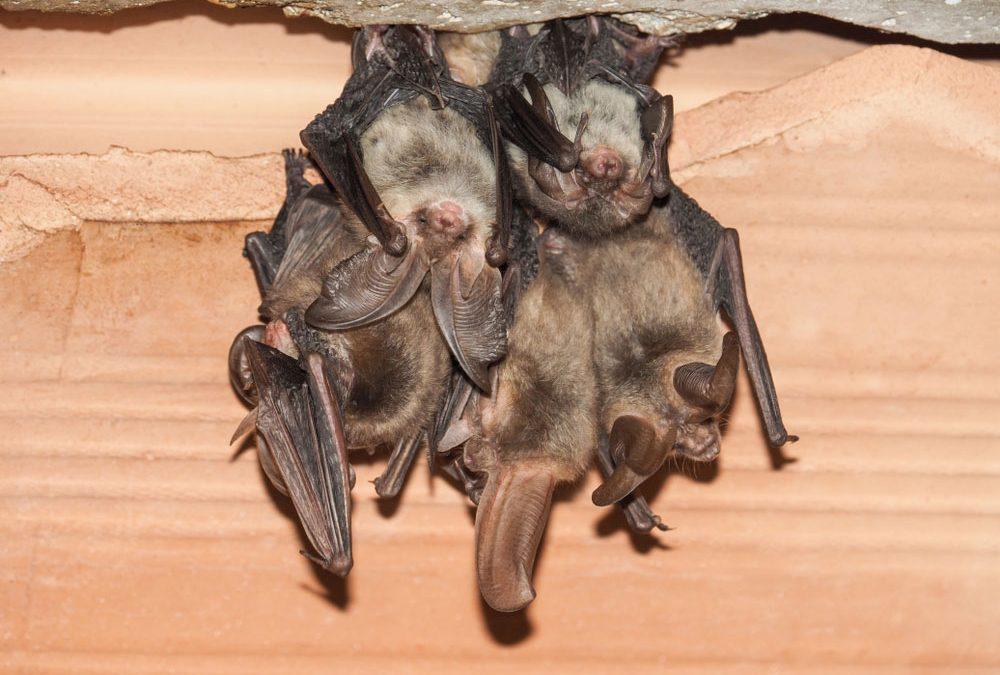Where Bats Make Their Homes