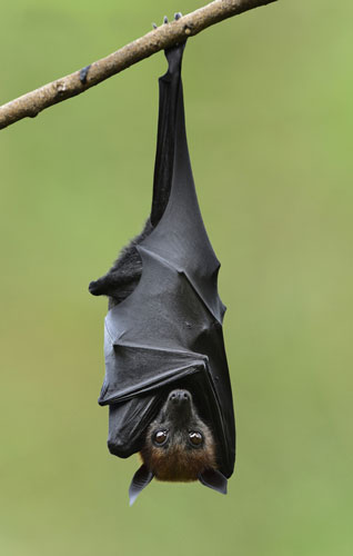 bat hanging outdoors