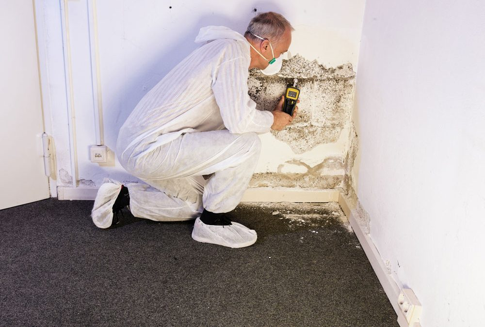 Attic Rodent Removal