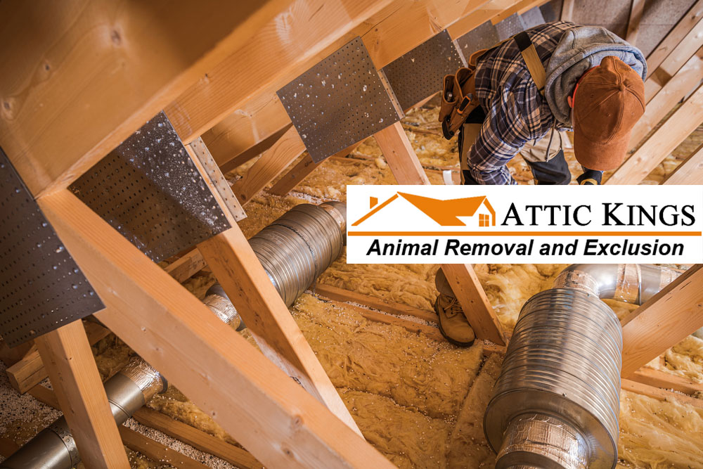 Animals Belong in the Wild, Not in Your Attic!