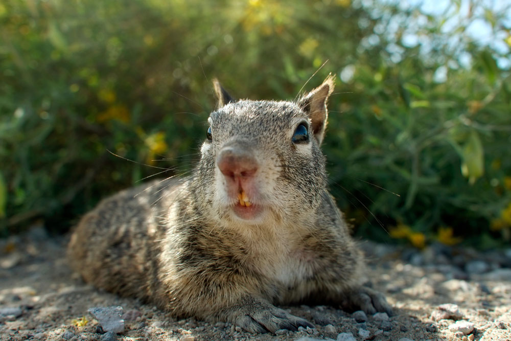 How Squirrels Can Cause Serious Damage To Your Home